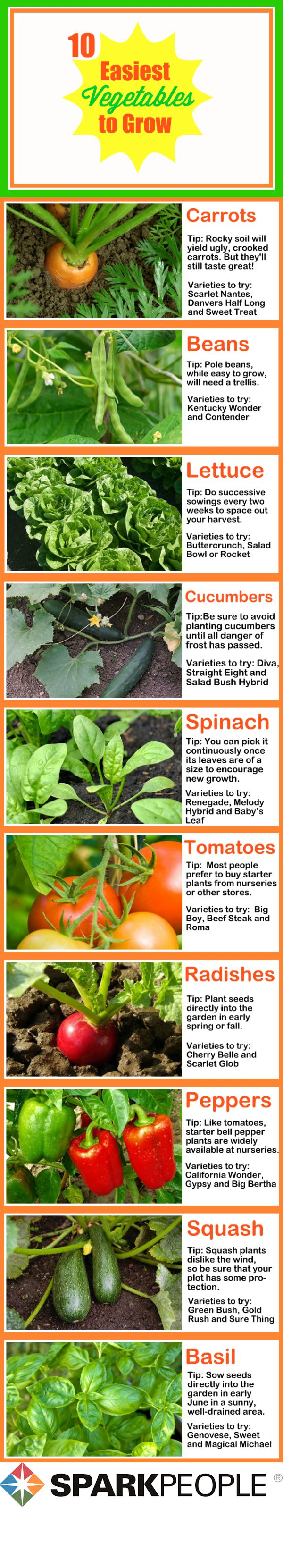 The 10 easiest vegetables to grow sparkpeople for Easiest vegetables to grow