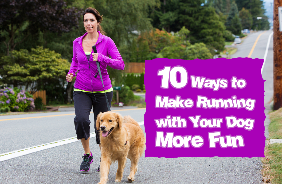 10 tips for running with your dog sparkpeople