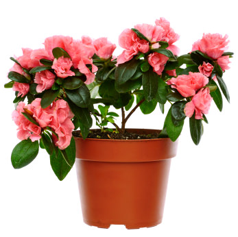 10 Common House Plants That Are Poisonous To Pets