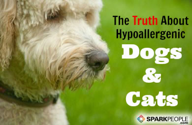 The Truth About Hypoallergenic Dogs And Cats Sparkpeople