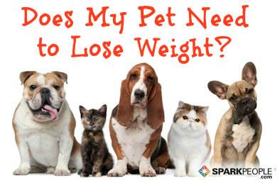 Healthy Pets Sparkpeople