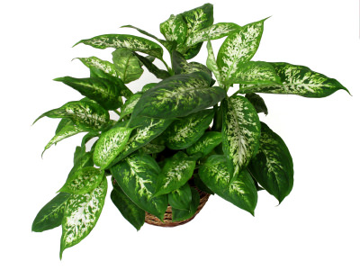 10 common house plants that are poisonous to pets sparkpeople - Common indoor plants ...