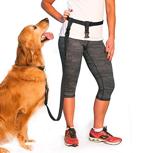 The Best Dog Leashes And Harnesses For Any Activity