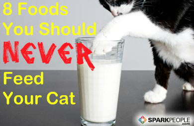 8 Foods You Should Never Feed Your Cat