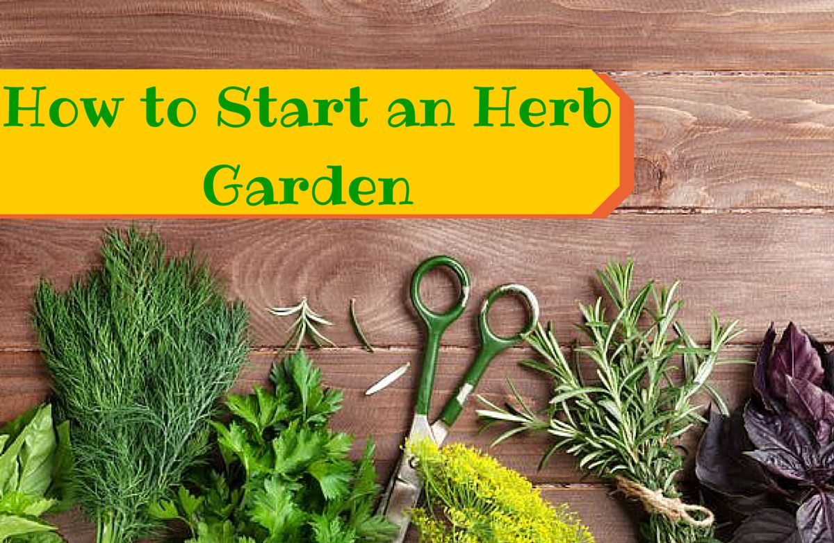 Image result for learn How to Grow Your Own Indoor Herbs