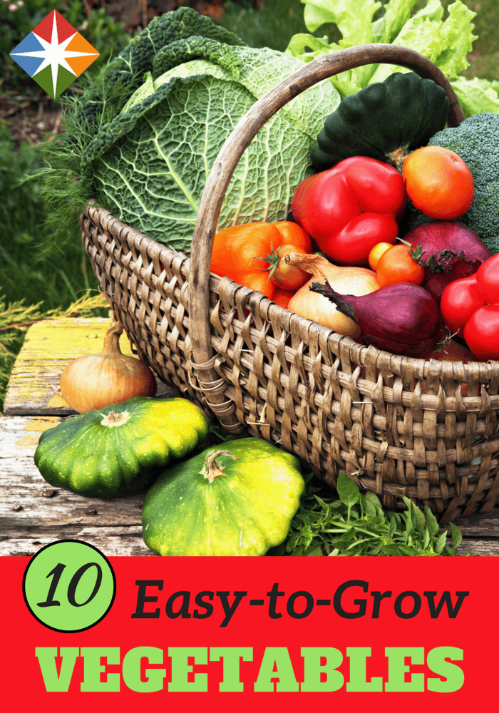 The 10 Easiest Vegetables to Grow   SparkPeople