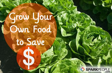 Calculating the Cost of Growing Your Own Food