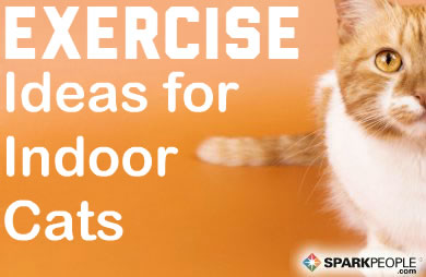 Exercise Ideas For Indoor Cats Sparkpeople